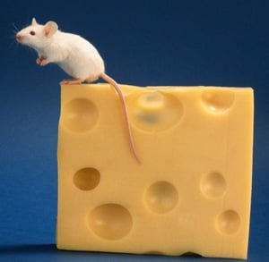 mouseandcheese