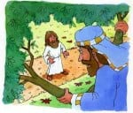 Zacchaeus, Come Down!
