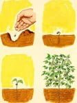 From Seeds to Food
